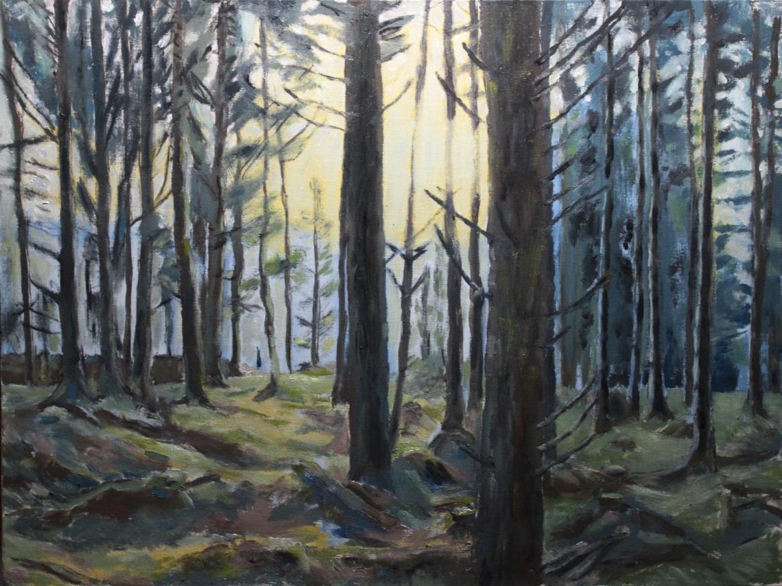spruce-forest-sketch