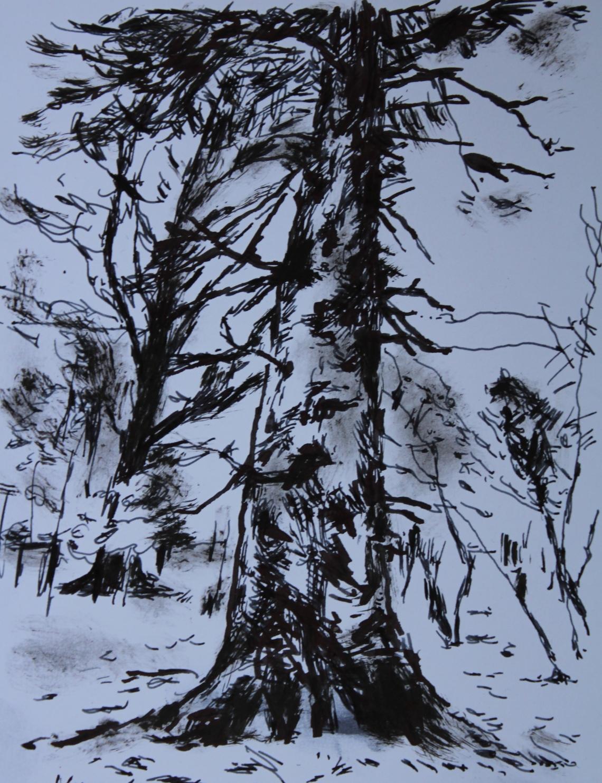 very large pine derrynaskineen