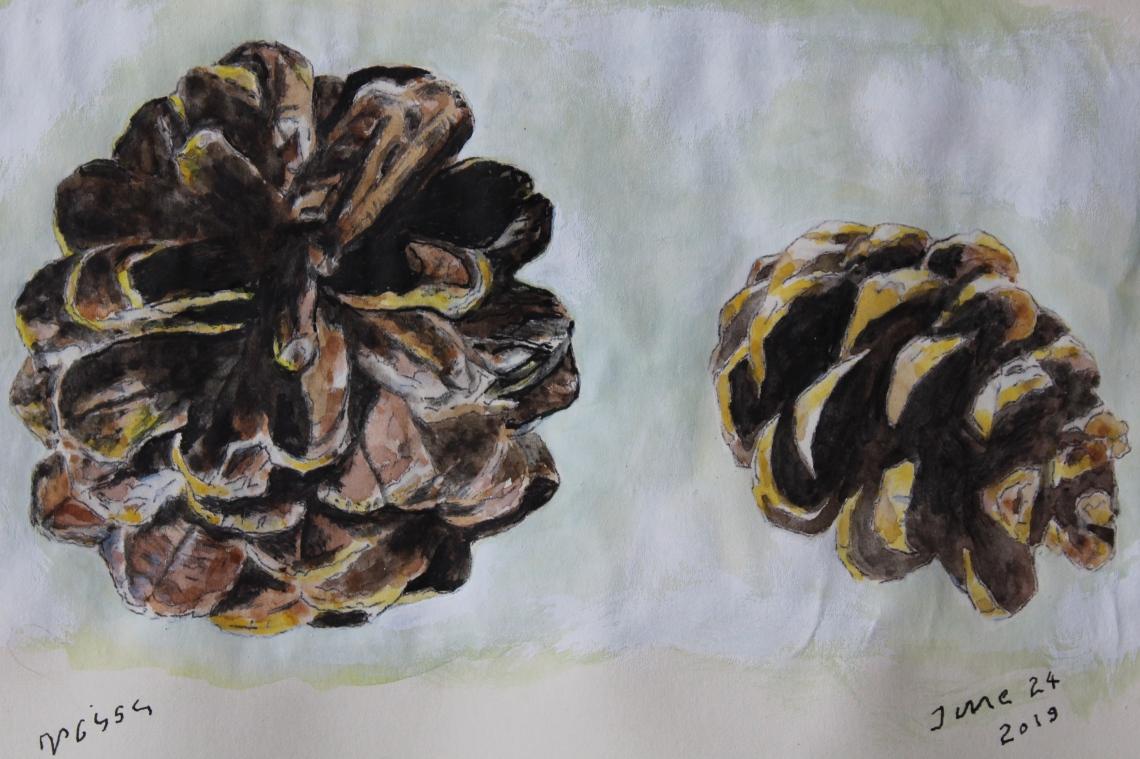 2 pine cones