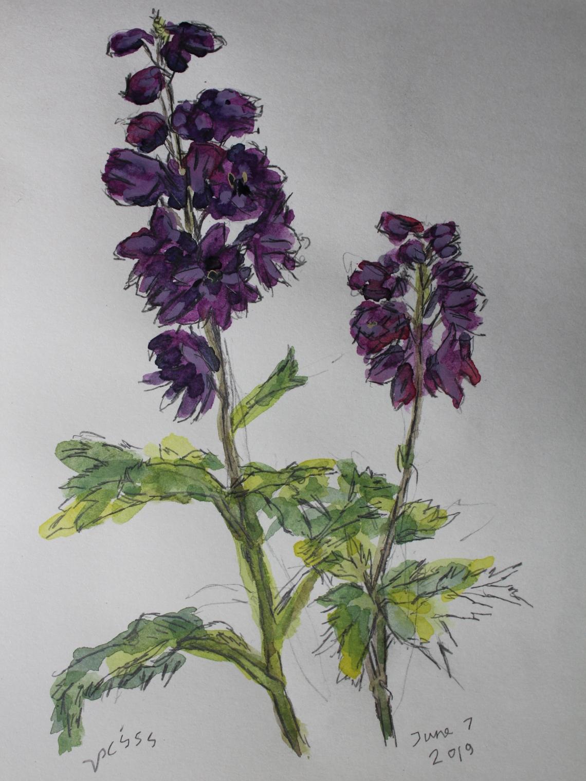 delphiniumish flowers