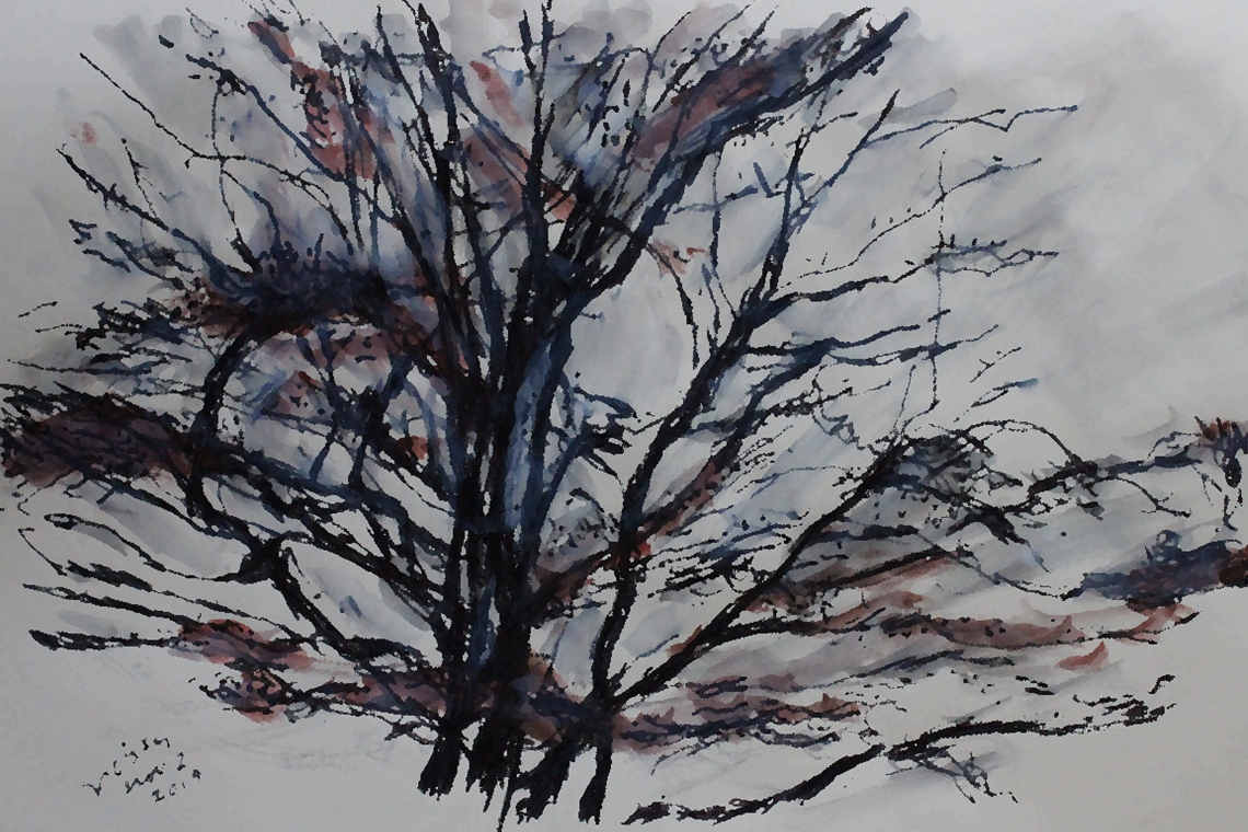 hawthorn in winter digitised
