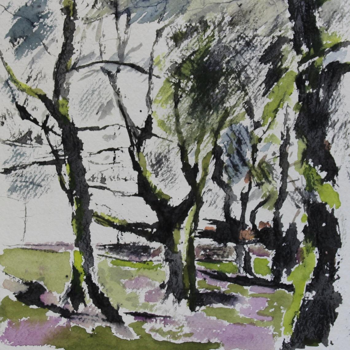 beech trees fenagh