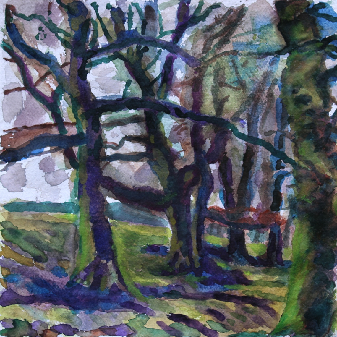 beeches watercolour