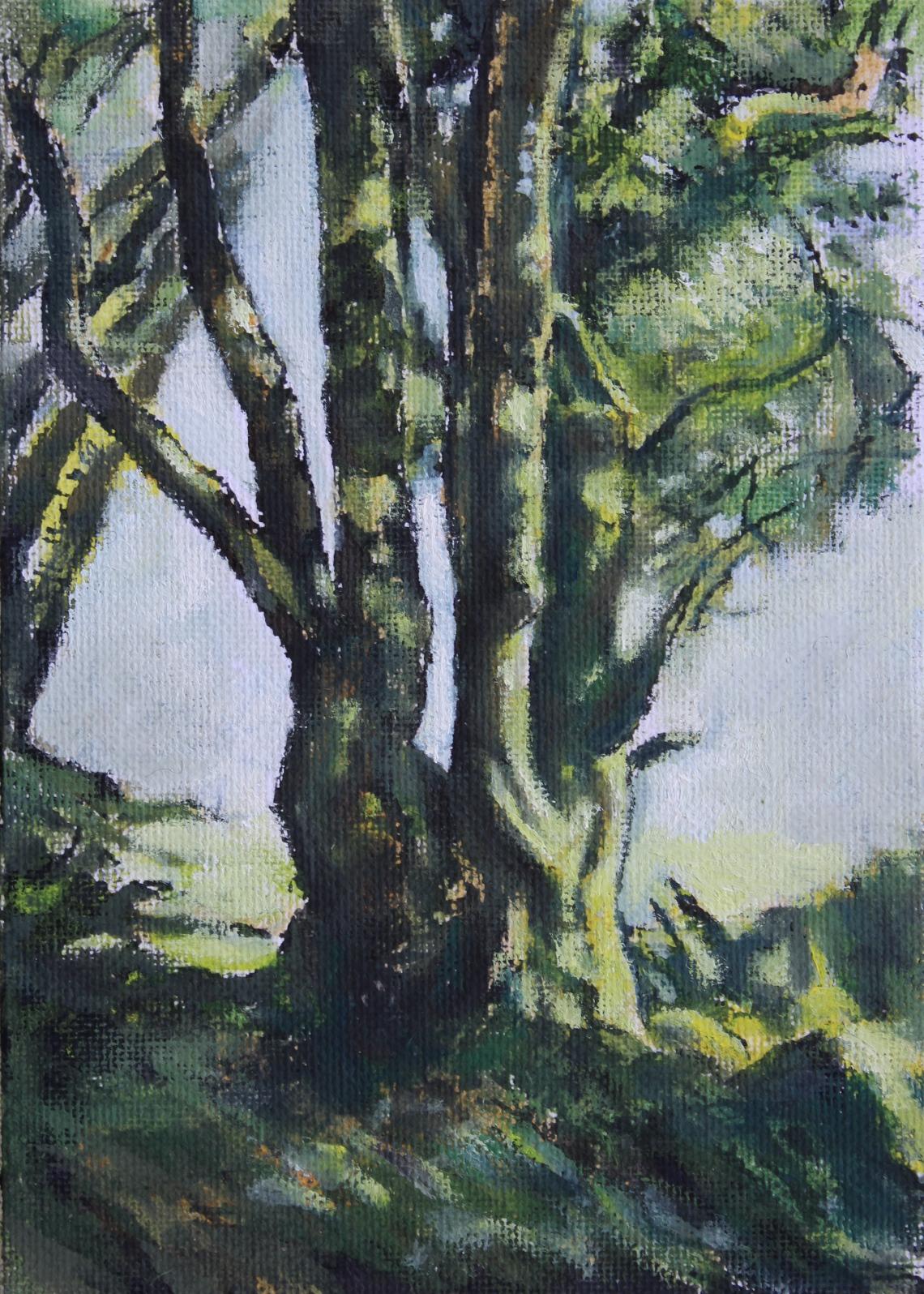irish ash and ivy in winter 2