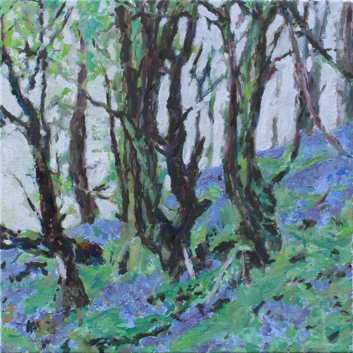 bluebell wood 4